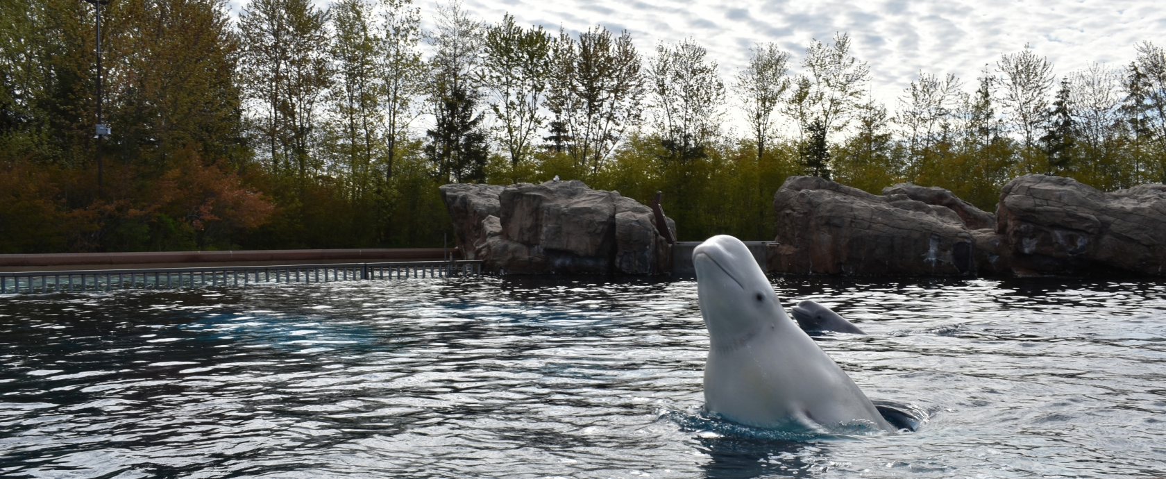 Contact Us - Marineland